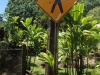 maui-road-to-hana2