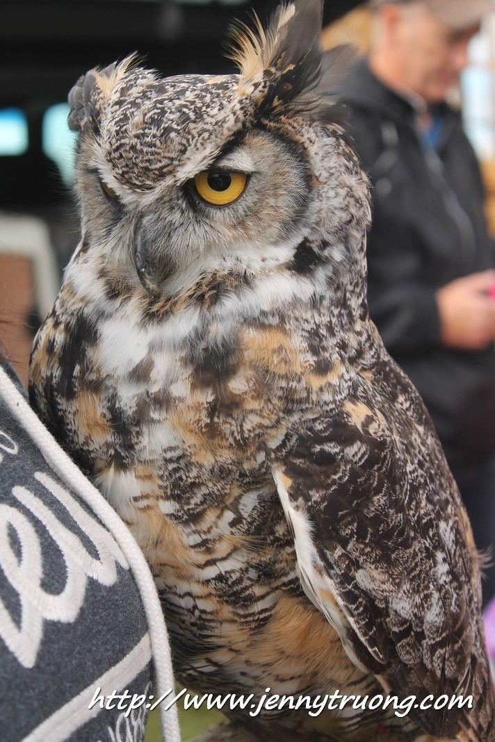 2014 Wilmot Orchard Breakfast Owl