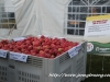 2014 Wilmot Orchard Breakfast Apple Contest