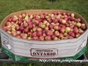 2014 Wilmot Orchard Breakfast Apples